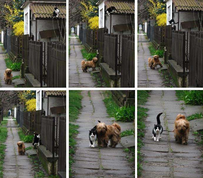 un câine și o pisică la o plimbare împreună